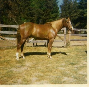 Horses003