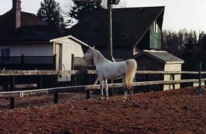 Horses012