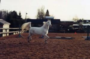 Horses013