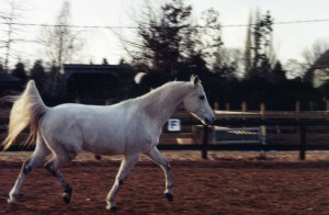 Horses014