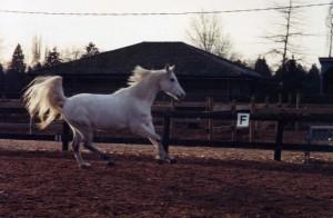 Horses015