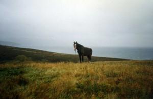 Horses016