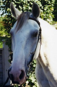 Horses017