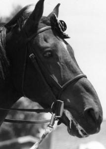 Horses026